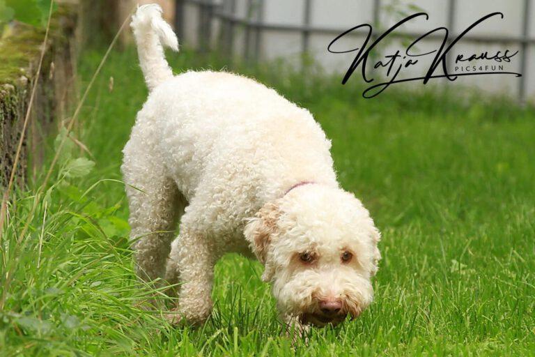 Hundeschule-GREH-7Schnü_0E6A0002