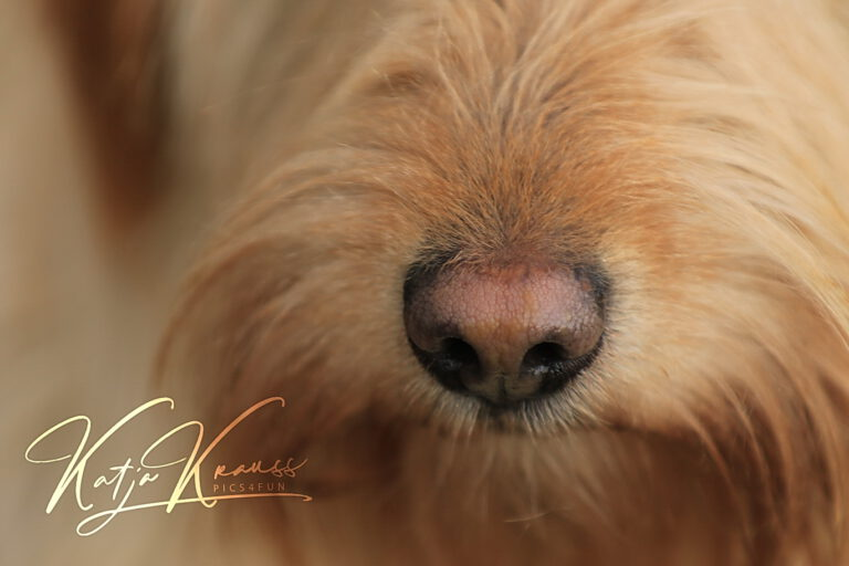 Hundeschule-GREH-7Schnü_0E6A4227