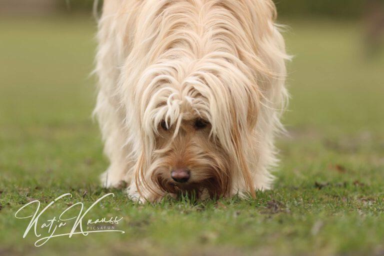 Hundeschule-GREH-7Schnü_0E6A5408