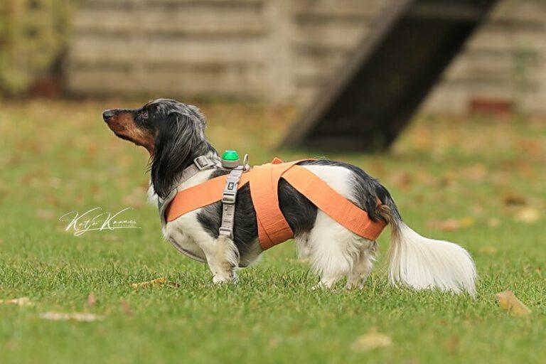 Hundeschule-GREH-8Tell_0E6A0001