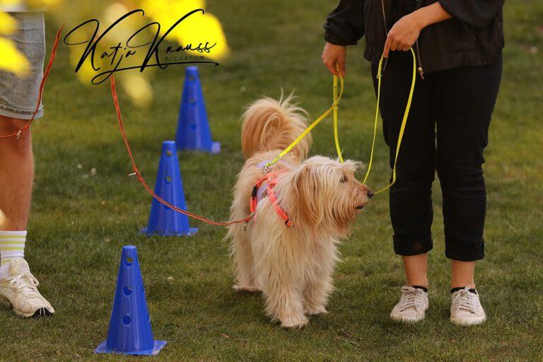 Hundeschule-GREH-8Tell_0E6A0002