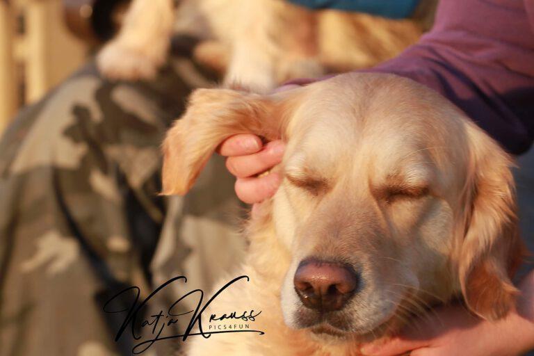 Hundeschule-GREH-8Tell_0E6A0003