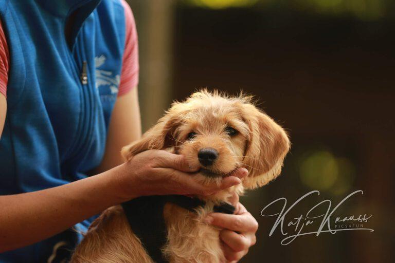 Hundeschule-GREH-8Tell_0E6A7105