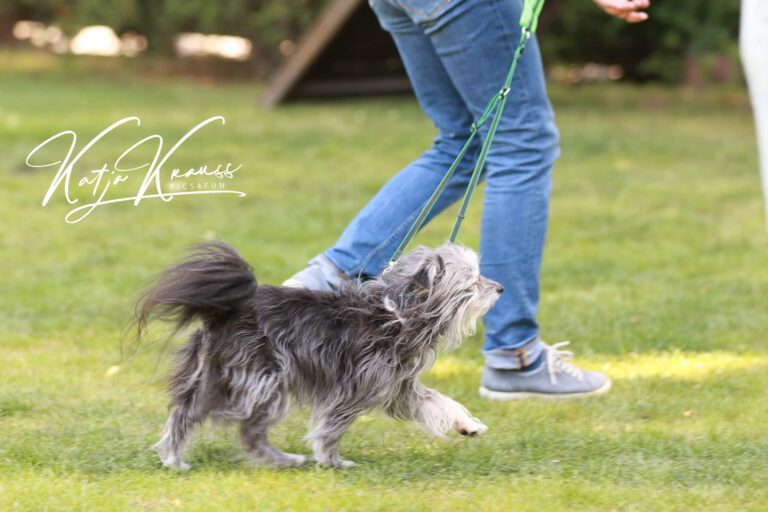 Hundeschule-GREH-8Tell_0E6A9531