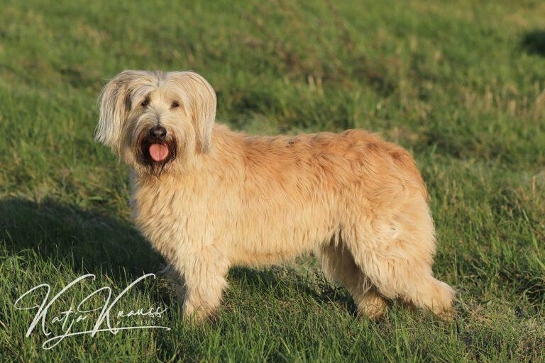 Hundeschule-GREH-9Hundf_0E6A0001