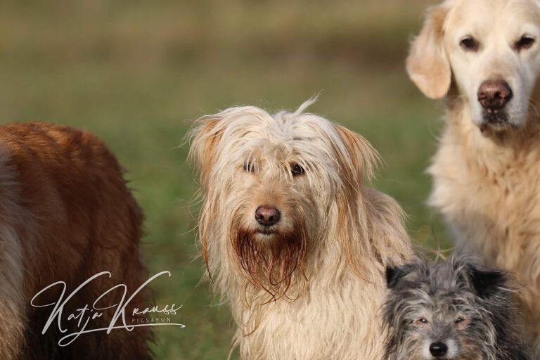 Hundeschule-GREH-9Hundf_0E6A0002