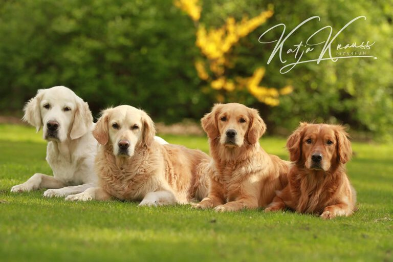 Hundeschule-GREH-9Hundf_0E6A0004