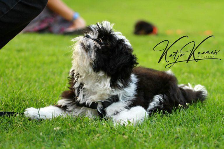 Hundeschule-GREH-9Hundf_0E6A0005