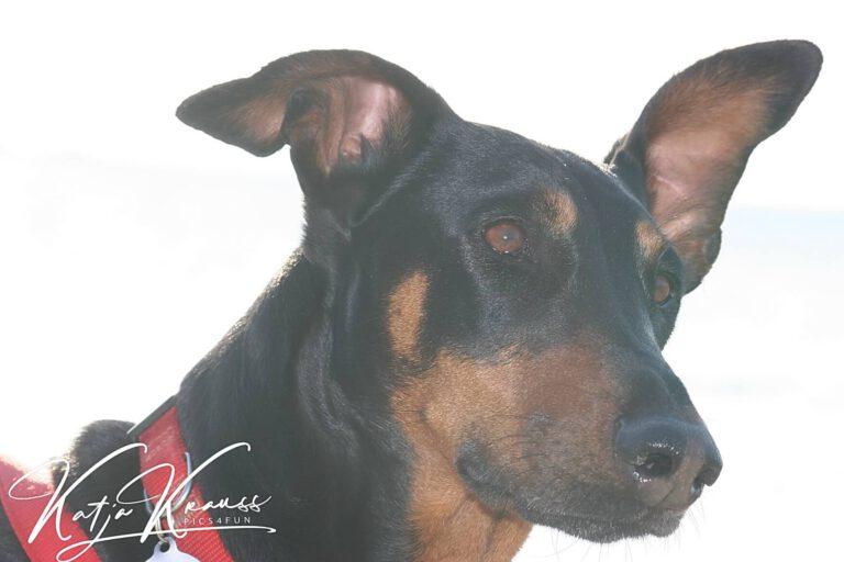 Hundeschule-GREH-9Hundf_IMG_0359