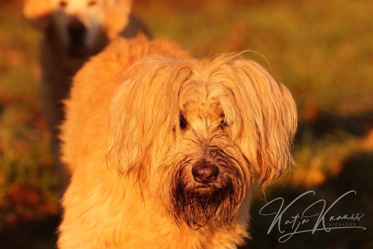 Hundescule-GREH-19Ausbild_0E6A3930