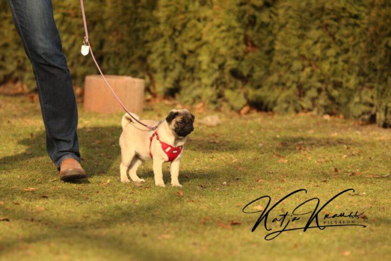 Hundeschule-GREH-11Grund_0E6A1130