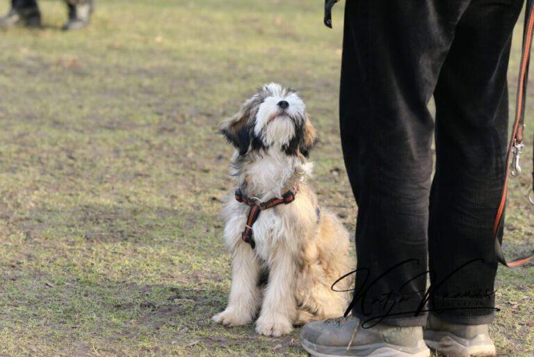 Hundeschule-GREH-11Grund_0E6A2253