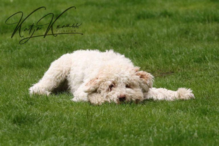 Hundeschule-GREH-31Aktu_0E6A5752