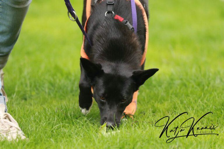 Hundeschule-GREH-7Schnü_0E6A5678