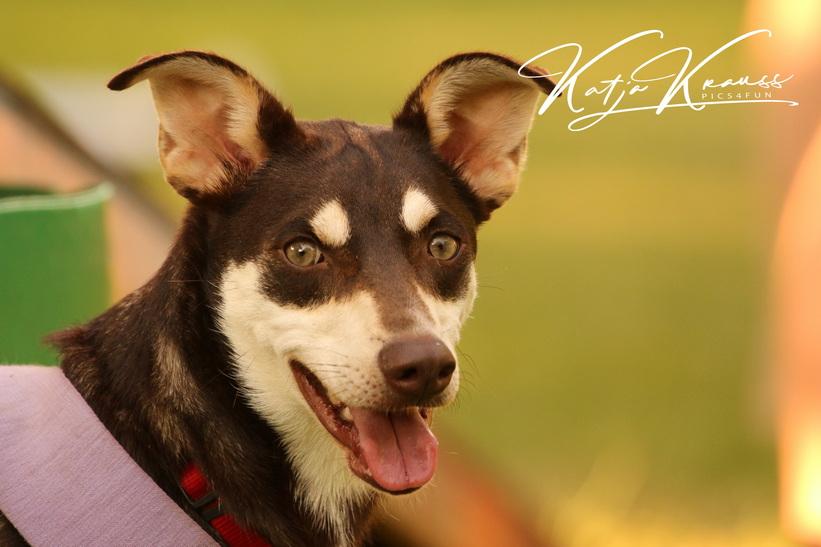 Maskenpflicht entfällt - Hundeschule GREH
