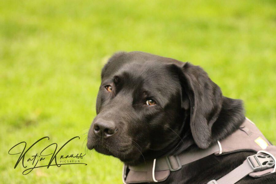 Covid19 Testpflicht entfällt - Hundeschule GREH