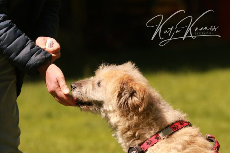 Hundeschule-GREH-11Grund_0E6A5309