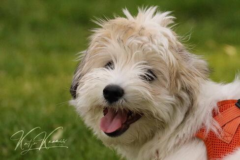 Hundeschule-GREH-1Home_0E6A8304