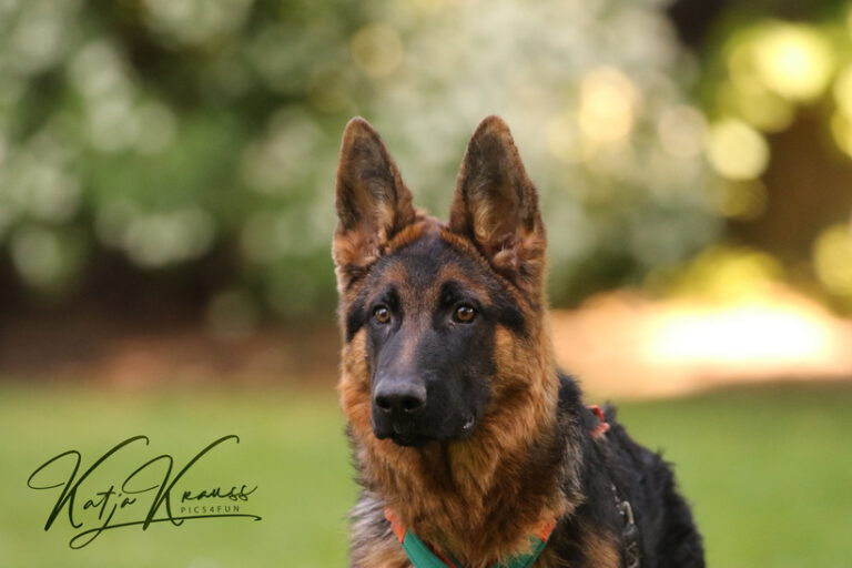 Hundeschule-GREH-44Anind_0E6A9354
