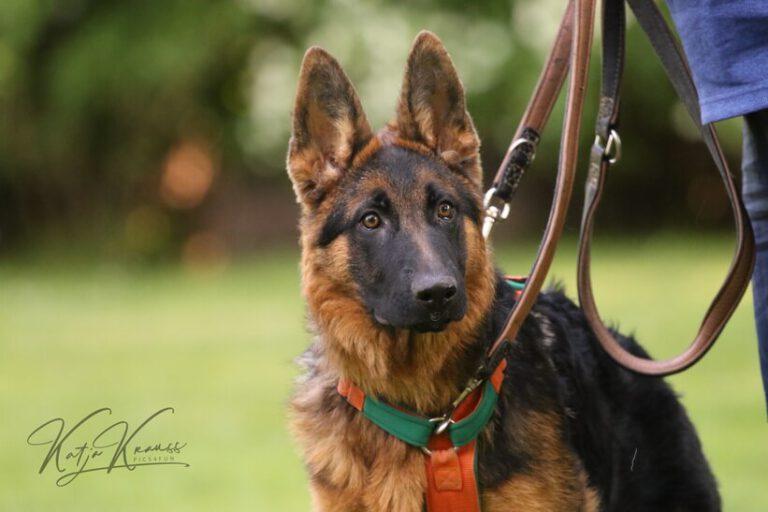 Hundeschule-GREH-5Jung_0E6A9056