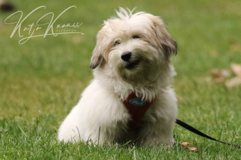 Hundeschule-GREH-6JungM_0E6A2835