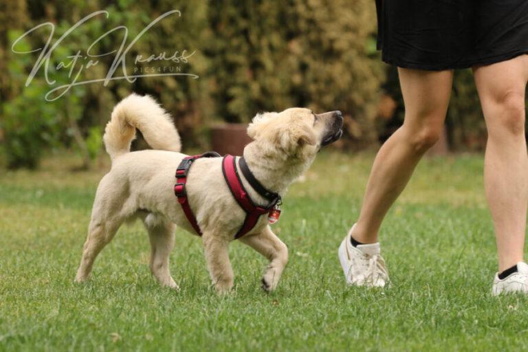 Hundeschule-GREH-9Hundf_0E6A2554