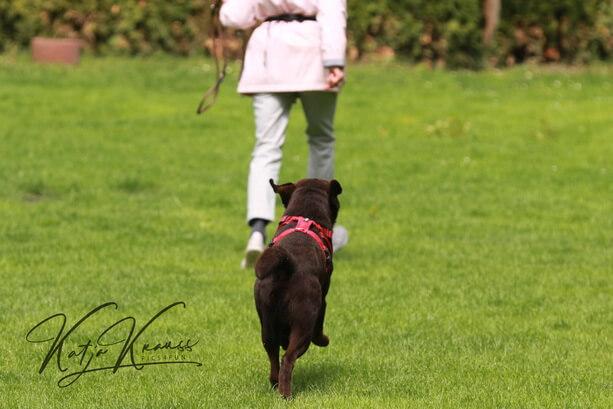 Hundeschule-GREHG-17ES_0E6A5096
