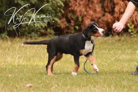 Hundeschule-GREH-3Welp_0E6A9949