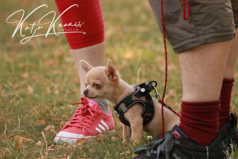 Hundeschule-GREH-4WelpM_0E6A0009