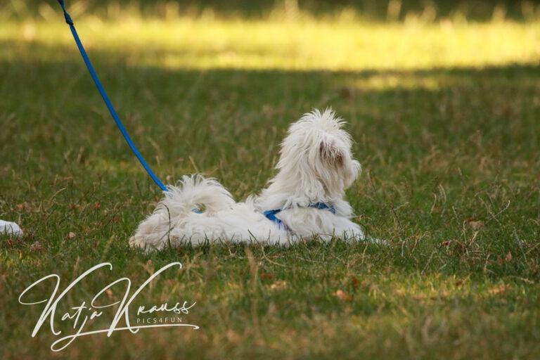 Hundeschule-GREH-4WelpM_0E6A0018