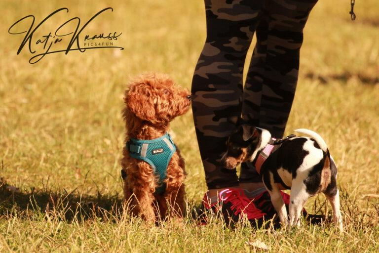 Hundeschule-GREH-4WelpM_0E6A0092