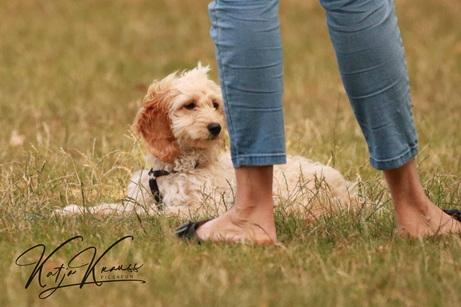 Hundeschule-GREH-4WelpM_0E6A9947