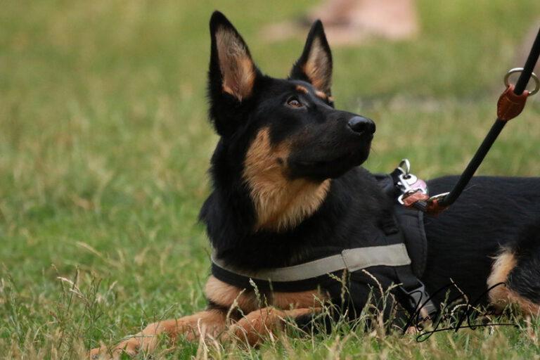 Hundeschule-GREH-5Jung_0E6A9181