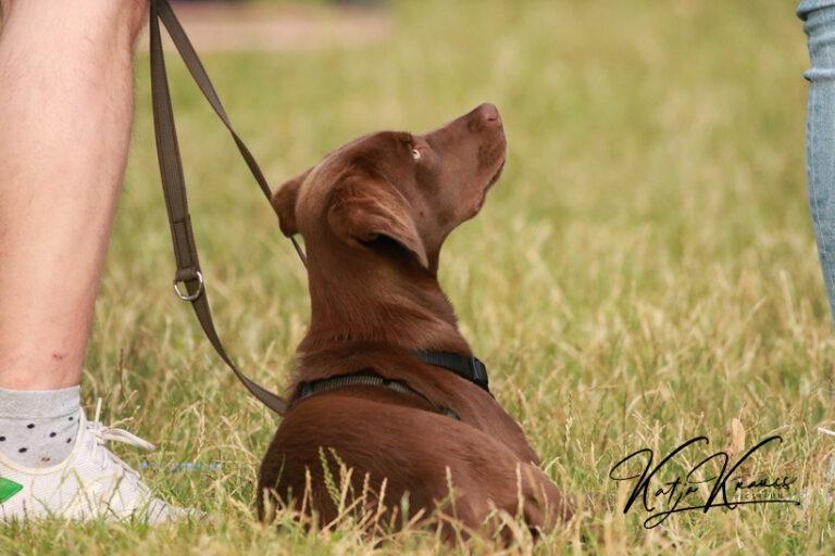 Hundeschule-GREH-5Jung_0E6A9199