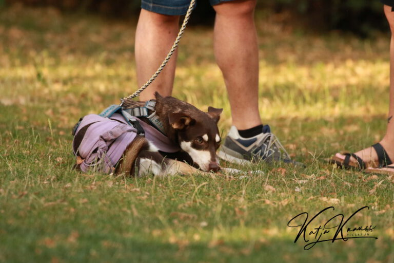 Hundeschule-GREH-5Jung_0E6A9218