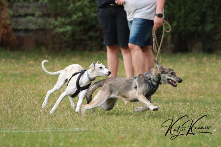 Hundeschule-GREH-5Jung_0E6A9440