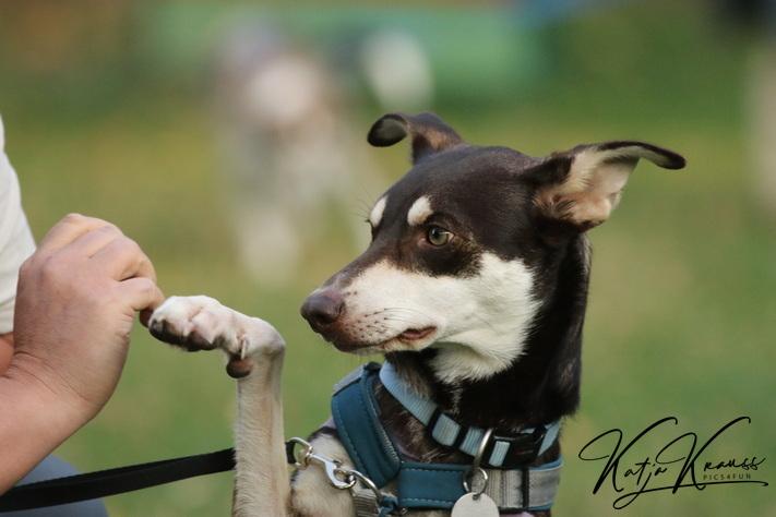 Hundeschule-GREH-10Mobum_0E6A5423