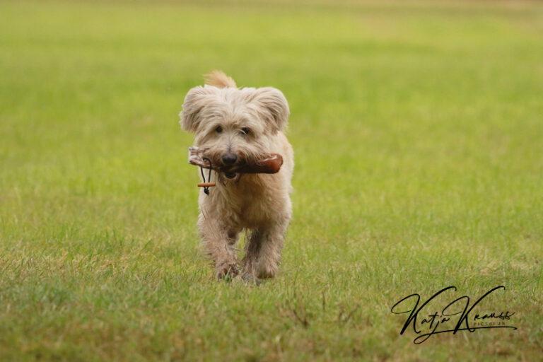 Hundeschule-GREH-13Mobk_0E6A5692