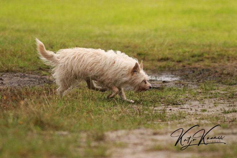 Hundeschule-GREH-14Schnük_0E6A5648