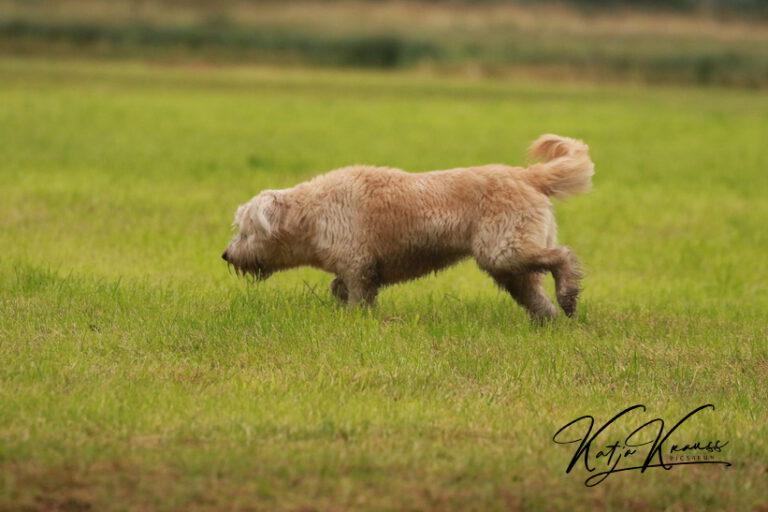 Hundeschule-GREH-14Schnük_0E6A5676