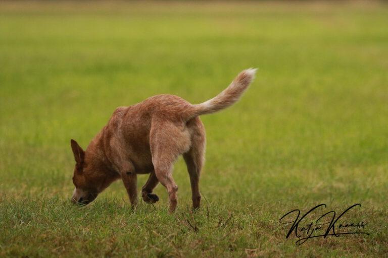Hundeschule-GREH-14Schnük_0E6A5791