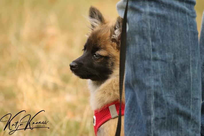Hundeschule-GREH-16kost_0E6A4849