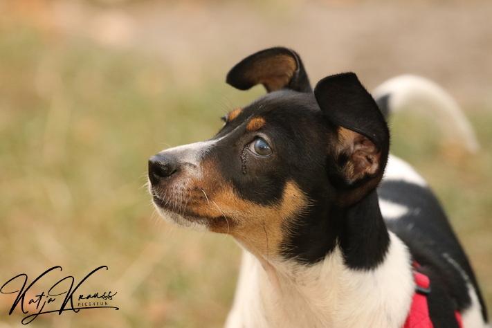 Hundeschule-GREH-16kost_0E6A4850