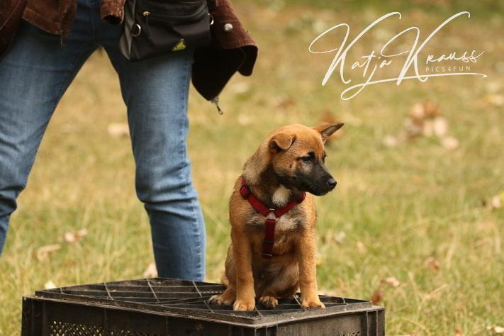 Hundeschule-GREH-2Ange_0E6A4781