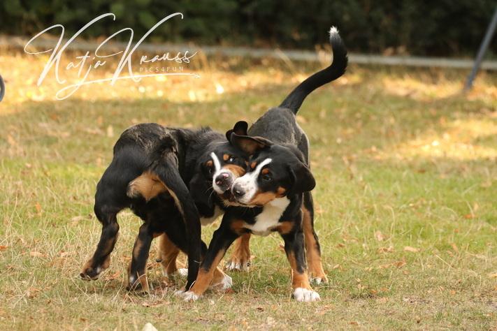 Hundeschule-GREH-2Ange_0E6A4787