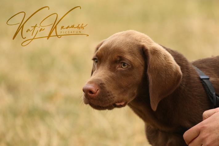 Hundeschule-GREH-2Ange_0E6A4797
