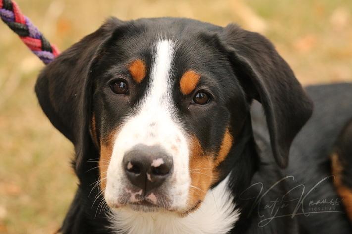 Hundeschule-GREH-2Ange_0E6A4823