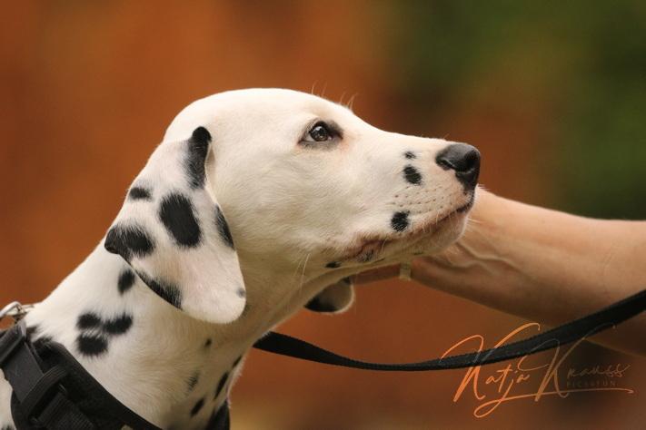 Hundeschule-GREH-2Ange_0E6A4836
