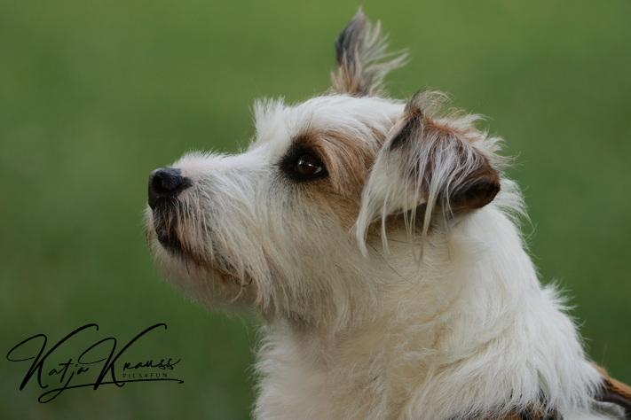 Hundeschule-GREH-2Ange_0E6A8725