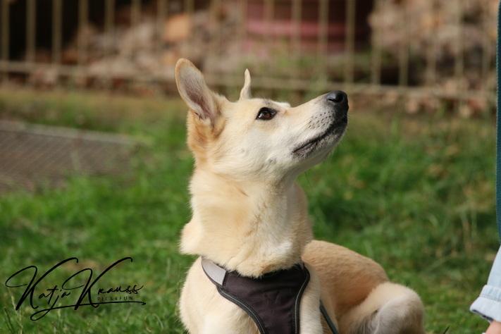 Hundeschule-GREH-2Ange_0E6A8873